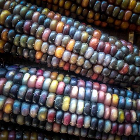 organic_glass_gem_corn_large